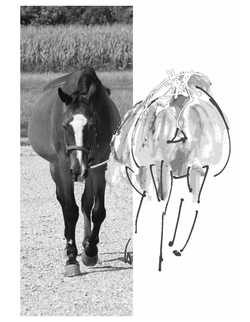 Exodus cavallo a riposo